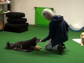 Tricktraining mit zwei Hunden erfordert Konzentration (Clickerkurs)