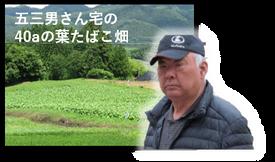 野田葉タバコ生産組合 菅原五三男さん