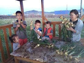 植え付けた野菜の多くが既に収穫の時を迎えている