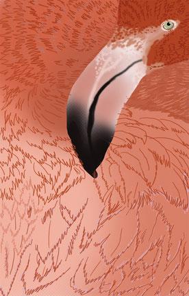 Salmon Flamingo - 100x70 cm