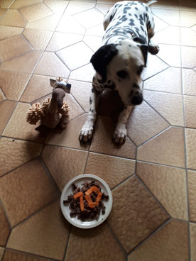 Elexa vom Furlbach an ihrem 10. Geburtstag...04.05.2021