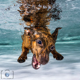 Bild: Hunde unter Wasser Berlin