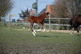 2010 Fido im Alter von 3 Wochen