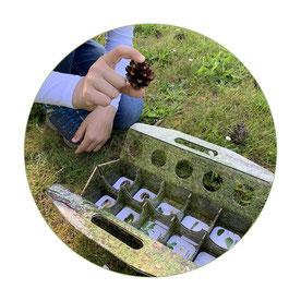 schlaubatz Sammelkiste - Mit Kindern die Natur entdecken - Auf Schnitzeljagd gehen und einen Kiefernzapfen finden