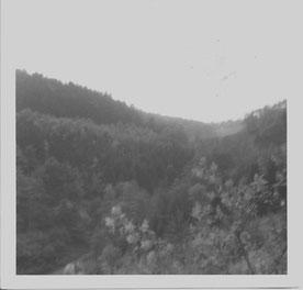 Ein altes Foto von einem alten Wald.