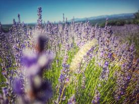 Provence-Kollektion
