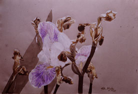 Still life on Ingrès paper with Polychromes pencil (1987)