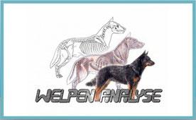 Japan Akita, Hund, Zucht, Hundezucht, Welpenanalyse, Hundeanalyse, Doris Walder, Eva Holderegger Walser