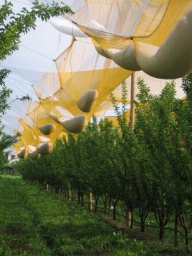 антиградовая сетка для садов, виноградников Ставрополь