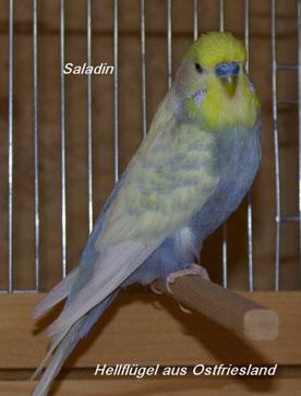 Papa Saladin (dessen Eltern sind Salazar und Tiziana)