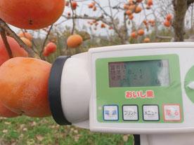 岐阜県で育てた甘い富有柿