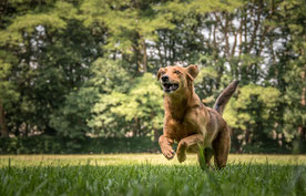gespecialiseerde cursussen hond