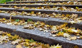 Einzelne aufwärtsgehende Treppenstufen mit Laub, die den Anlageverlauf eines Sparplans symbolisieren