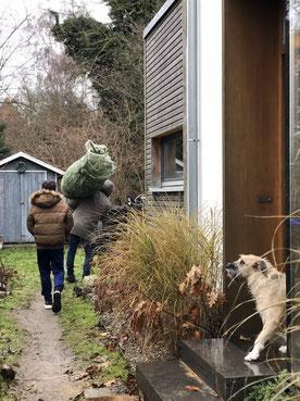dieartigeBLOG // Dezember, Weihnachtsbaum 2019, Nordmanntanne - nachhaltig + frisch geschlagen, Zuhause, Vorpommern