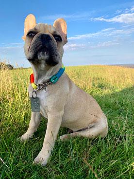 OTTO ist seit 2019 unser neuer Beach Assistent ;-)