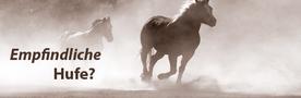 Empfindliche Pferdehufe