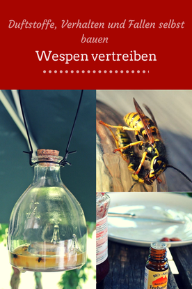 #Wespen Duftstoffe, Verhalten und Fallen selbst bauen - Wespen vertreiben