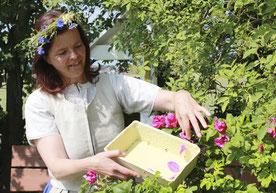 Die ehemalige Kräutermarie Ulla Buddeus zeigte im Sommer 2012 wie Rosenblätter richtig geerntet werden. Foto: Konder