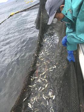 平戸・松浦 漁師体験