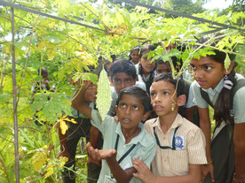 学校菜園にて。収穫した野菜は給食に活用