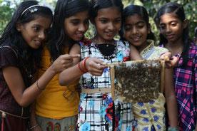 養蜂を体験する中で、いのちのつながりや自然の恵みについて学ぶ