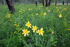 Sibirische Blumenwiese