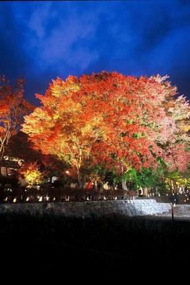 河口湖紅葉祭り