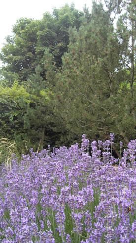 Dans notre jardin naturel, les abeilles effectuent leur travail de pollinisation.