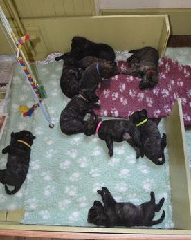 Ze slapen lang en diep.. hoe saai is dat?