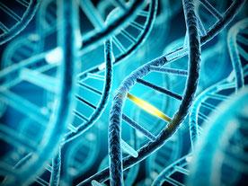 Redaktion, Text und Lektorat Simone Giesler - CRISPR / Cas
