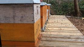 Im Frührjahr beginnen die Bienen mit dem Eintrag von Nektar und Pollen.