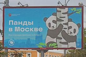 Pandabären-Straßenwerbung des Moskauer Zoos