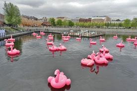 Flamingos im Hafenbecken von Neu-Holland in St. Petersburg