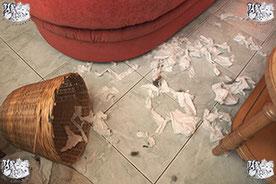 ec chiens exemple de destruction faite par un chien qui a besoin de l'aide d'un comportementaliste canin