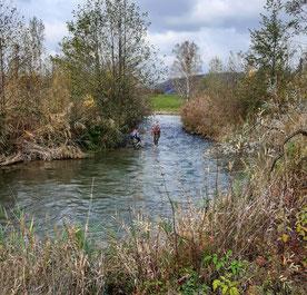 Kontrollabfischen 05.11.2020 Umgehungsgewässer Leibstadt durch Fa. Aquarius. (Foto HL)