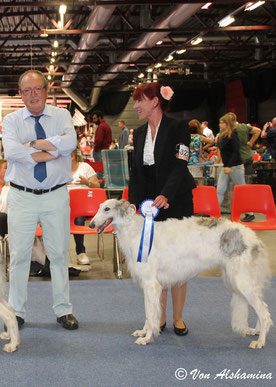Weiß-silberne Barsois aus eingetragener Barsoi Zucht in Deutschland/White-silver borzois out of great borzoi breeding in Germany!