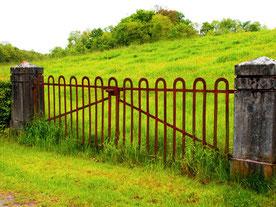 ein würdiger Weide-Zugang