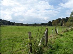 Bild: Die Teichwiesen