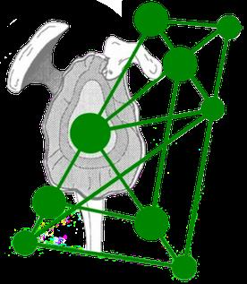 logo schoudernetwerk