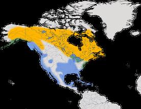 Karte zur Verbreitung der Amerikanische Silbermöwe/Kanadamöwe (Larus smithsonianus)