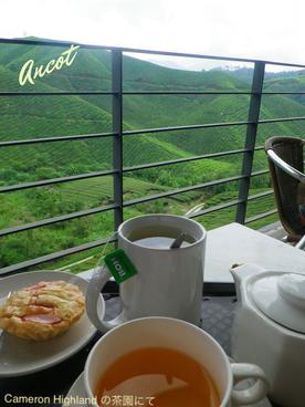紅茶教室ANCOT レッスン
