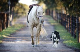 Strahlenflüchter sind z.B.: Pferde und Hunde