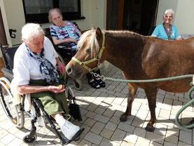 Reittherapie im Odenwld, Wellenreiter, Lampenhain, tiergestützte Therapie