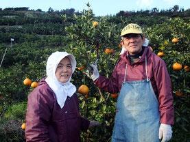 愛媛県で季節の柑橘類を無農薬栽培する味香ん園井上夫妻