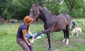 Manuelle Therapien - Mobile Tierheilpraxis Schinko