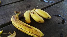 Bananes du jardin tropical couleurs antilles