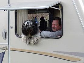Der Schapendoes Junghund Benny fährt im Wohnwagen in die schöne Pfalz. Die Schapendoes Zucht in Bayern zeigt sehr gerne diese Fotos, die zum nachahmen anregen