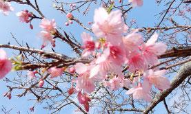 Unsere Winterreise nach Okinawa 2019