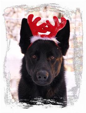 Weihnachtsgrüße aus Norwegen von Axl