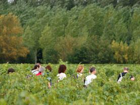 le Chemin de la vigne du Haut Montlong